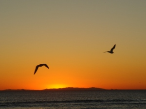 Seagulls over LA beach