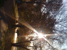 Sparkling Fallview