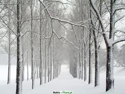snow path trees